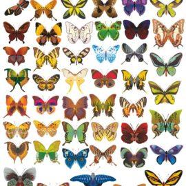 Бабочки в векторе: Подборка #01 из 56 векторных бабочек