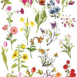 Цветы векторный клипарт №001: Векторные цветы