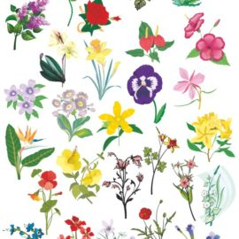 Цветы векторный клипарт №002: Векторные цветы