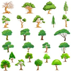 Vector trees collection #2