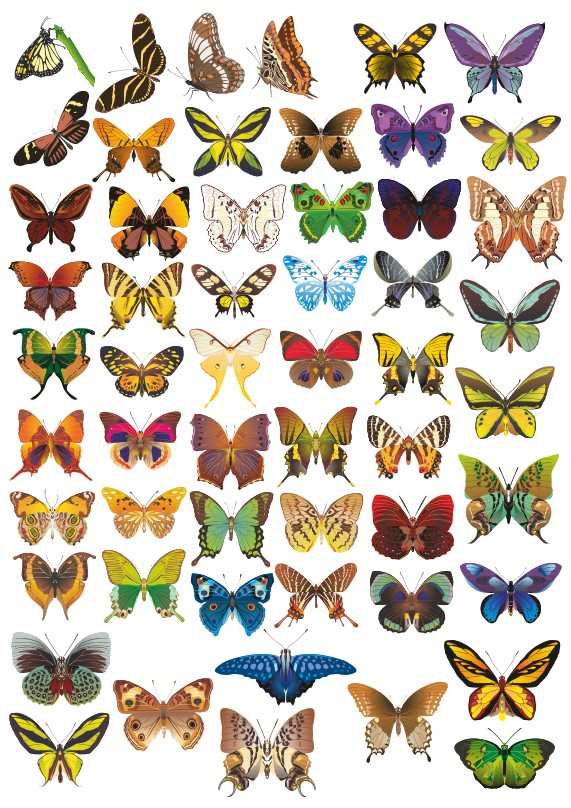 Butterflies vector, animal vector, color vector