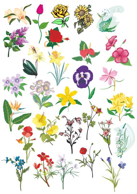 векторные цветы, цветы векторный клипарт,векторные цветы скачать, роза вектор, нарцис вектор, фиалка вектор