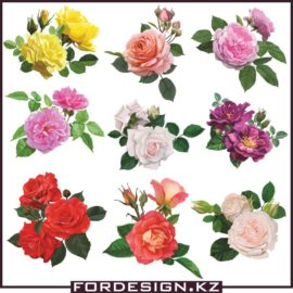 Rose vector: Flowers roses in vector collection # 01 download free!