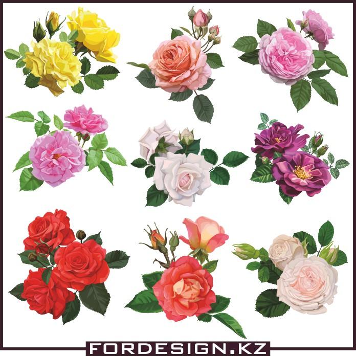 rose vector, vector rose, vector plants, color vector