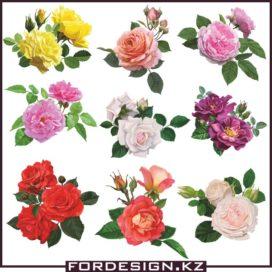 Роза вектор: Цветы розы в векторе коллекция №01 скачать бесплатно!