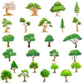 Сборник векторных деревьев №2